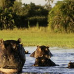 3 Great Reasons To Visit Botswana